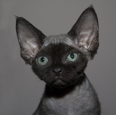 devonrex091112web