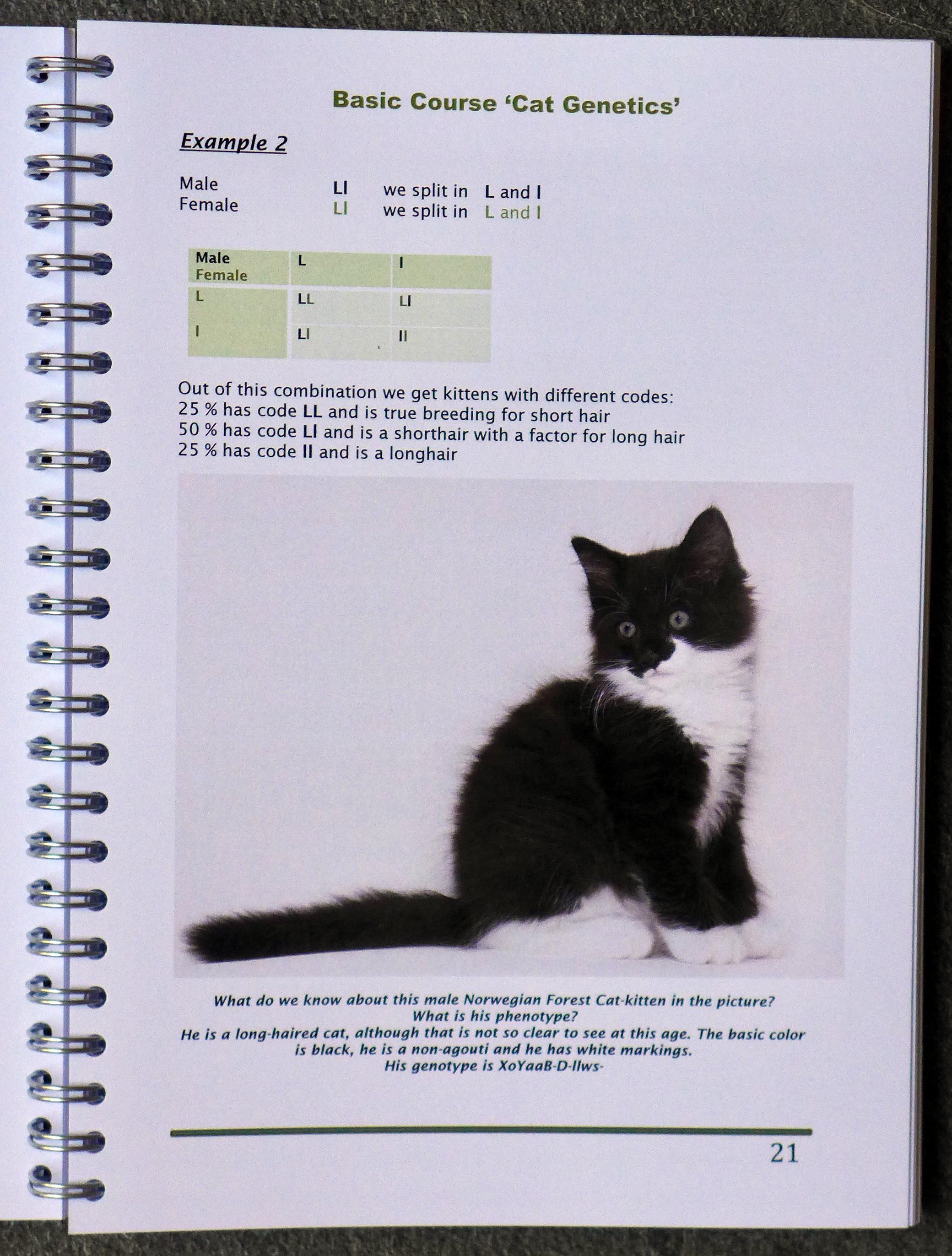 kattengeneticaboekeng